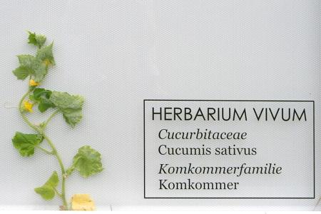 hv-komkommer-detail