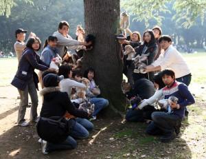 Konijnenliefhebbers poseren met hun konijn voor een ginkgo boom in het Yoyogi park in Tokyo, 2010, KCCM