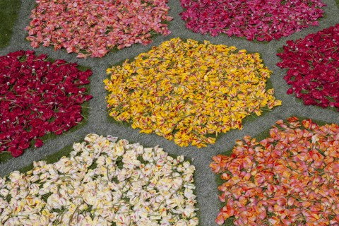 Zeshoekige bloemperken van tulpenkoppen, detail