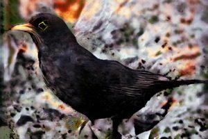 spotter-blackbird-output2-web-driessens-verstappen
