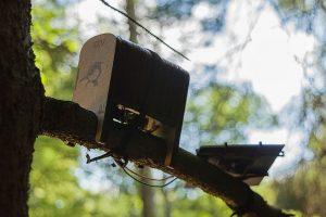 woodpecker-rihards-vitolt